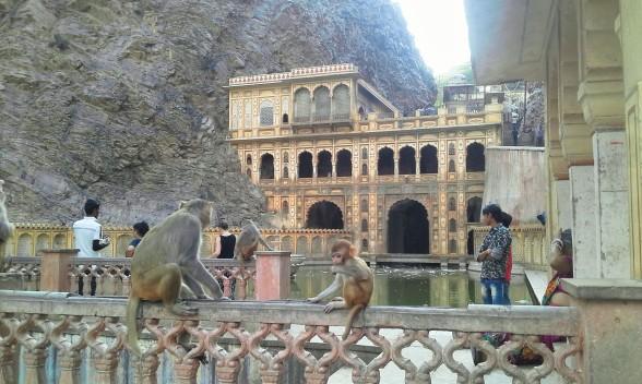 il-tempio-delle-scimmie