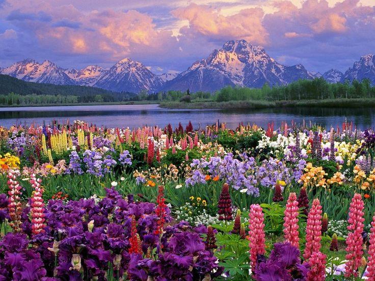 La valle dei fiori, terra delle fate. – passoinIndia